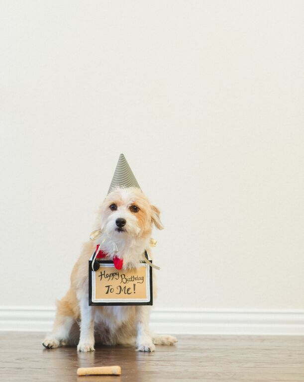 puppy-birthday-boy