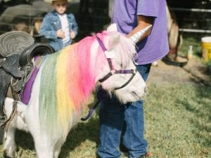 a pony with its mane dyed in all the colors of the rainbow, wearing a unicorn horn